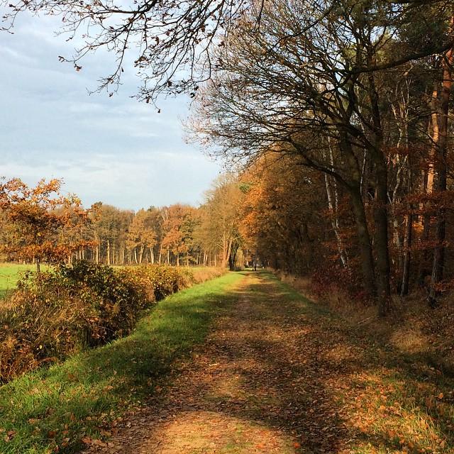 heelmijnweek_47_2014_herfst in Twente