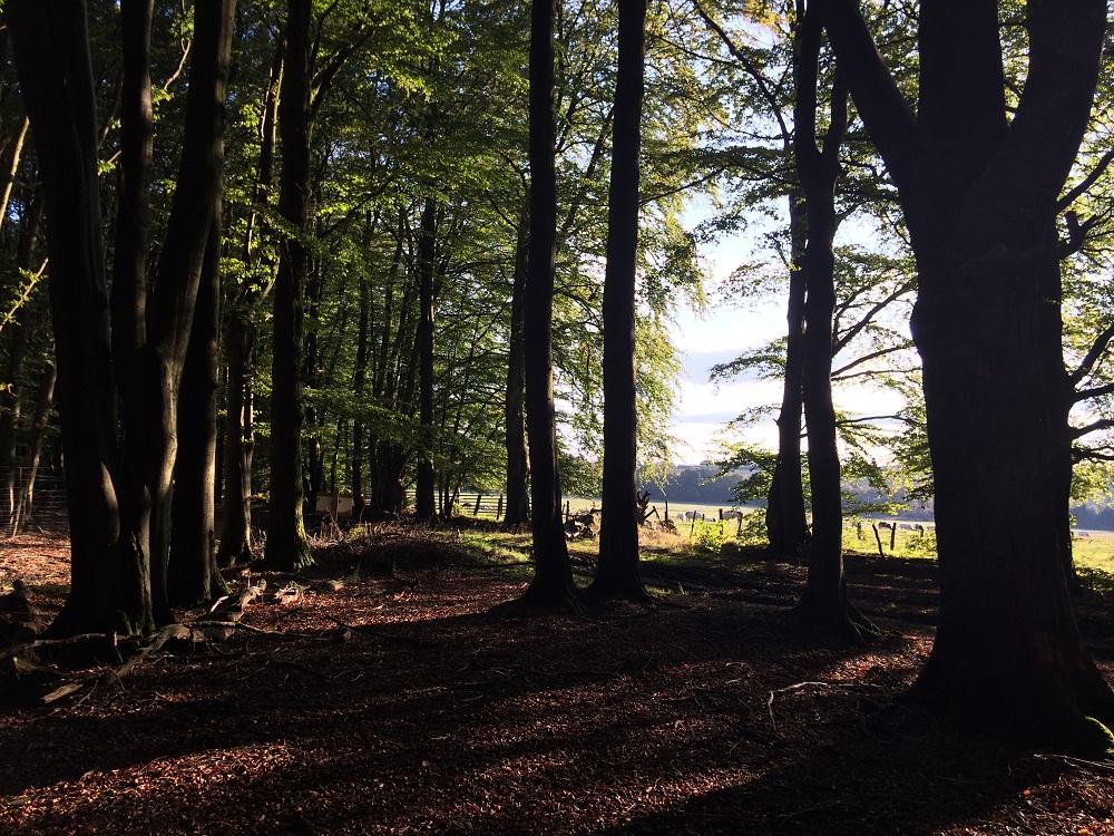 Mijn week 39 - Trailrunning Dochamps