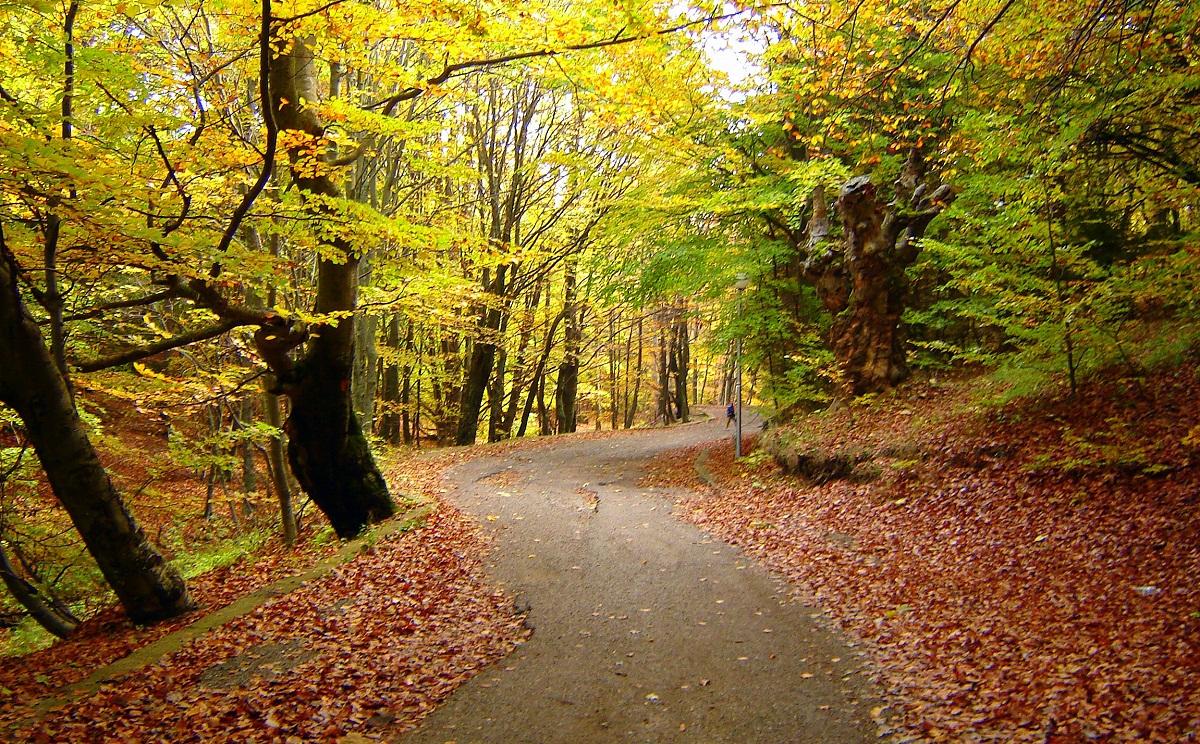 hardlopen in de herfst 1